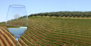 3-Wine_in_the_vineyards1